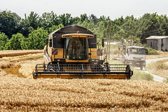 Combine Harvester (GCF Photography) Tags: summer food plant tractor france industry nature ecology field closeup rural work season bread landscape gold golden countryside corn industrial technology cut earth farm wheat country farming grain cereal harvest grow machine seed straw environmental farmland rye equipment machinery growth crop combine ear land produce growing farmer trailer agriculture job spikes harvester agricultural ripe harvesting commodities reaping harvestwheat harvestermachine georgiafowler