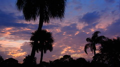 Sunset Friday night over Bradenton (Jim Mullhaupt) Tags: pink blue trees sunset red wallpaper sky orange color silhouette yellow clouds palms landscape evening flickr florida bradenton manateecounty mullhaupt jimmullhaupt