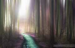 The Enchanted Wood.. (Philip R Jones) Tags: wood forest walk infrared mystical enchanted icm delamere hss fauxinfrared fauxicm