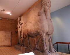 2015-05-20_WingedBull-118808 (athenacgy) Tags: london britishmuseum assyrian sargon khorsabad sennacherib