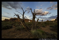 Window Seat (SounDesign Photography) Tags: park sunset red sky color tree window rock photography utah rocks arch desert seat aaron north arches national moab juniper shirk soundesign