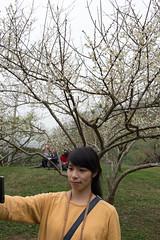 DSC_1208 (chenjn) Tags: d600 nikon 2470mm 妖怪村 柳家梅園 taiwan 信義鄉 梅花