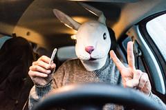 C'EST PAS RAISONNABLE ROGER, TES OREILLES TOUCHENT LE PLAFOND ! (nARCOTO) Tags: lapin rabbit