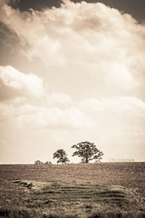 Country Side 14/366 (Umpire's Photographer) Tags: tree oklahoma countryside alone country pray moore 365 366 20somethingcountry