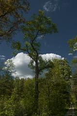 Cloud tree (KF-Photo (off)) Tags: pentax wolke wald bume schnbuch tamron1750 pfrondorf mischwald k20d waldstimmung