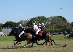 flying ball (carojustcaro) Tags: horses ball polo polocrosse