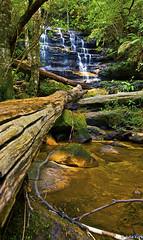 Blue Mountains (jyork2003) Tags: australia bluemountains nsw