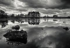 Knowetop Lochs Nature Reserve (.Brian Kerr Photography.) Tags: blackandwhite reflections mono scotland availablelight naturereserve lochs ze dumfriesandgalloway zeiss21mm corsock knowetop canon6d distagont2821 briankerrphotography briankerrphoto wwwbriankerrphotographycom knowetoplochs