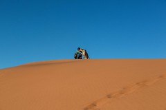 20130616_Namibia_Kiki_at_Dunes_0171.jpg (Bill Popik) Tags: africa kiki mammals namibia cheetahs 2places 3animals africancats