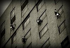 Window Cleaners (Adventurer Dustin Holmes) Tags: stlouis citylife windowwashers urbanlife windowcleaners washingwindows bosunschair boatswainschair bosunschairs boatswainschairs