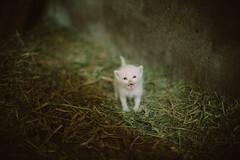 (Just A Stray Cat) Tags: cats baby film look field analog cat 35mm canon 50mm nikon dof kodak bokeh grain kitty kittens s 5d mm analogue manual 12 nikkor 35 160vc portra vc depth ai f12 160 filmlook ainikkor50mmf12s thecatwhoturnedonandoff
