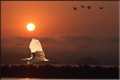 Sunrise Over The Marsh (Romair) Tags: sunrise egret rogerjohnson sliderssunday magnificentmanipulatedmasterpieces