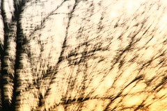 Terre d'Aubrac - Simon Guy (Simon Guy) Tags: france guy simon terre campagne foret lozere aubrac daubrac