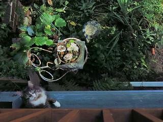 Makatak & the Garden #4348