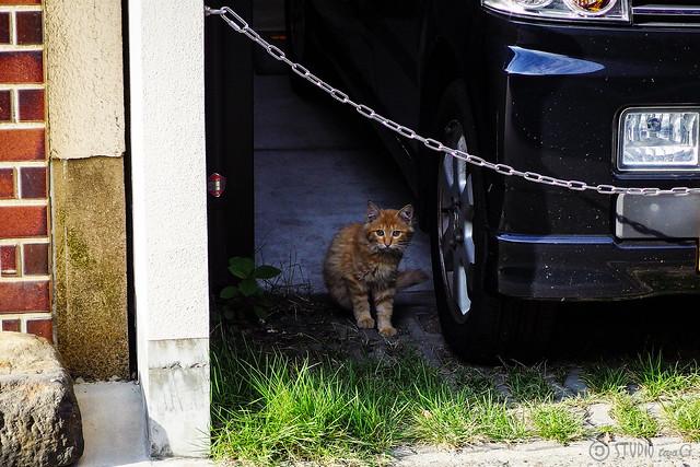 Today's Cat@2013-09-22