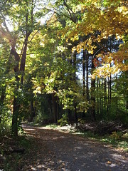 Autumn Walk (FroggyBangBang) Tags: wood orange color colour tree green leaves yellow jaune leaf path couleurs deadleaves vert arbre chemin bois feuille feuillesmortes