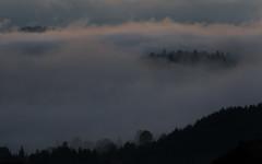 Notranjska (happy.apple) Tags: fog forest landscape geotagged evening slovenia slovenija večer notranjska cerknica gozd megla