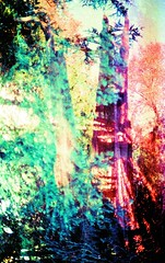 lightuu (angels_in_the_architecture) Tags: autumn leaves lemon shadows minolta juice doubleexposure tabasco destroyed xd c41