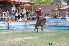 DSC_0274 (AgendaGauchaJujuy) Tags: argentina caballos palenque jinete gauchos jaramillo jujuy tilcara gaucho jineteada tropilla cachullani chucarodeldurazno quebaradehumahuaca