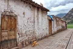 Pisac street #2 (larigan.) Tags: street dog peru southamerica andes markettown pisac pisaq urubambavalley larigan phamilton