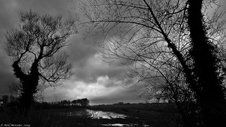 Somerset Skies.