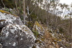 Organ Pipes Track