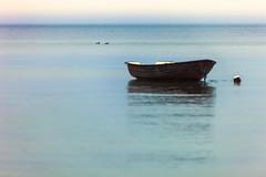 toppede skalleslugere (outdoorstudio) Tags: sea seascape water boat hav vand merganser redbreastedmerganser bd baad explored toppetskallesluger skallesluger mergusserratata