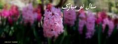 2- Norooz Hyacinths  (firooz_t) Tags: norooz      springvanouverbc