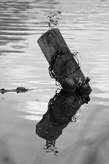 Vorwrts (Nordklee) Tags: wasser sw monochrom holz spiegelung zeit abstrakt stacheldraht kette