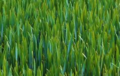 Growing (Happy! - Andrea) Tags: germany happy andrea olympus aachen zuiko 45mm omd em1 würselen bardenberg andreakd
