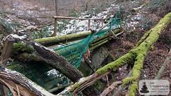 Beschädigte Brücke in der Kreuzbachklamm im Binger Stadtwald