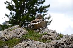 DSC_5041 (marcus.liefeld) Tags: italien alpen dolomiten südtirol gröden langkofel sassolungo