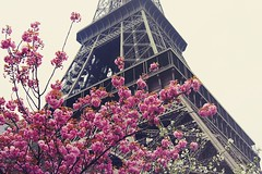 tour eiffel (chemicalbloom) Tags: flowers paris france sony eiffel