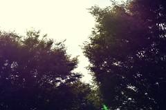 trees. (CARA__BURKE) Tags: street camera trees tree clouds nikon cara nn d7100 treesubject caraburke caraburkee carabukee nikond7100 caraburlke