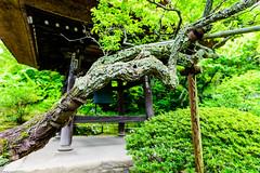 _DSC2644 (Abiola_Lapite) Tags: japan tokyo spring kamakura   nikkor  d800  2013 2470mmf28g