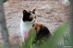 Almera (danizamo) Tags: espaa canon andaluca gatos animales barrio almera alcazaba almedina 500d