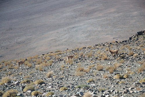 Wildlife in La Silla Observatory