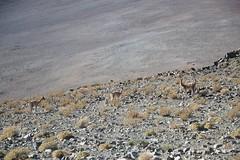 Wildlife in La Silla Observatory