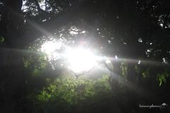 As de luz