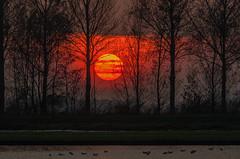Sunset is the opening music of the night (Wim Koopman) Tags: trees sunset lake holland water netherlands dutch weather silhouette golden pond bush nikon magic nederland hour shrub waterfowl plassen d90 goudriaan slingeland