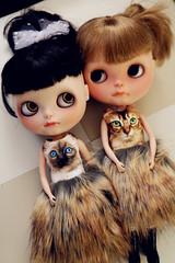 Meow twins