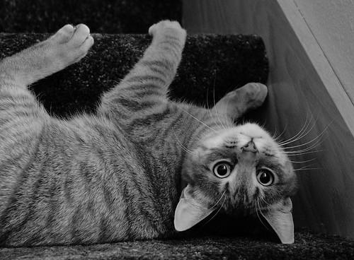 Upsidedown Cat