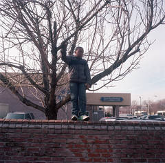 (Josh Sinn) Tags: boy color tree brick 120 6x6 film wall standing fence mediumformat kid md day boulevard child kodak young maryland baltimore parade ledge 100 mlk martinlutherking yashicamat124g ektar joshsinn