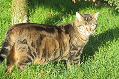 a cat in my garden...