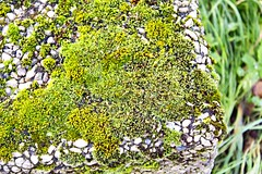 Moos (PinkboxxPhotography) Tags: park autumn green nature stone germany outside deutschland spring outdoor air herbst natur parks fresh grn fels stein luft frhling frisch uploaded:by=flickrmobile colorvibefilter flickriosapp:filter=colorvibe