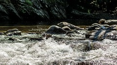 The Y June2015June 10, 2015-0069.jpg (albertjackson5750) Tags: splashingwater splashingtennesseeriver littletennesseeriversplash