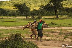 MASAI MARA (Kenia) (RLuna (Charo de la Torre)) Tags: kenya africa fauna solioranch aberdares nyeri topo naturaleza bufalo acacia rinoceronte naivasha rift thompson naroc guepardo leon girafa cebra gacela grulla cocodrilo lago elefante masai mara nakuru amboseli kilimanjaro ukunda safari todoterreno 4x4 viaje vacaciones holidays photo canon rluna rluna1982 karibu hakunamatata polepole wildlife sunset sunrise sun serengueti kenianairlines instagram flysafarilink raid enduro offroad motobike bike motocross moto spotlight onroad instagramapp photography me camera natural lignt