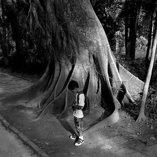 A anciã e o menino - The old tree and the boy