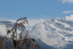 Le voyage inachevé (nathaliedunaigre) Tags: roseaux reeds bokeh effetbokeh montagnes mountains landscape paysage