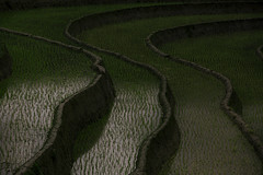 Vietnam (♫♪♭Happy new year ♫♪) Tags: enricodot rice field ricefield vietnam grass green water curves ilobsterit